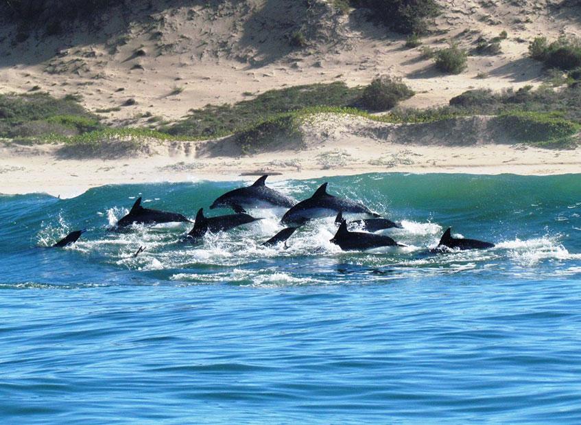 orca-foundation-dolphins
