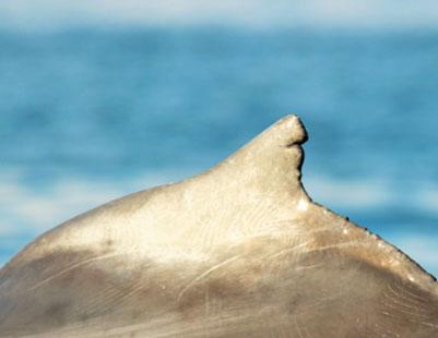 orca-shark-image